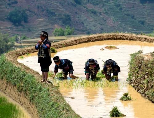 """五·一元阳哈尼梯田万人""""开秧门""""旅游文化节,寻找最原始的农耕生活!"""
