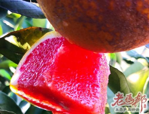 南盘江寻橙记——这才是真正的水果